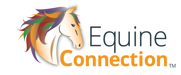Equine Connection | Certified Horse Course