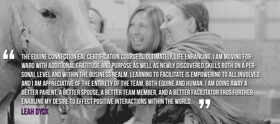 Become an equine assisted certified facilitator - horses helping people Equine Connection