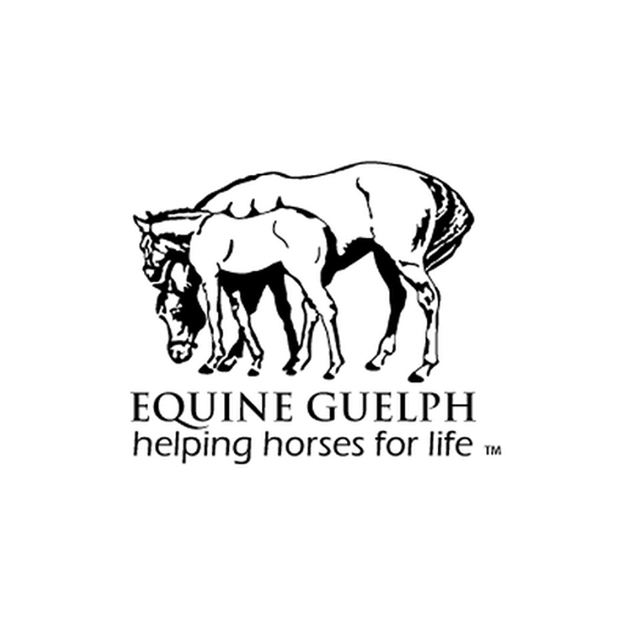 Equine Connection | Collaboration
