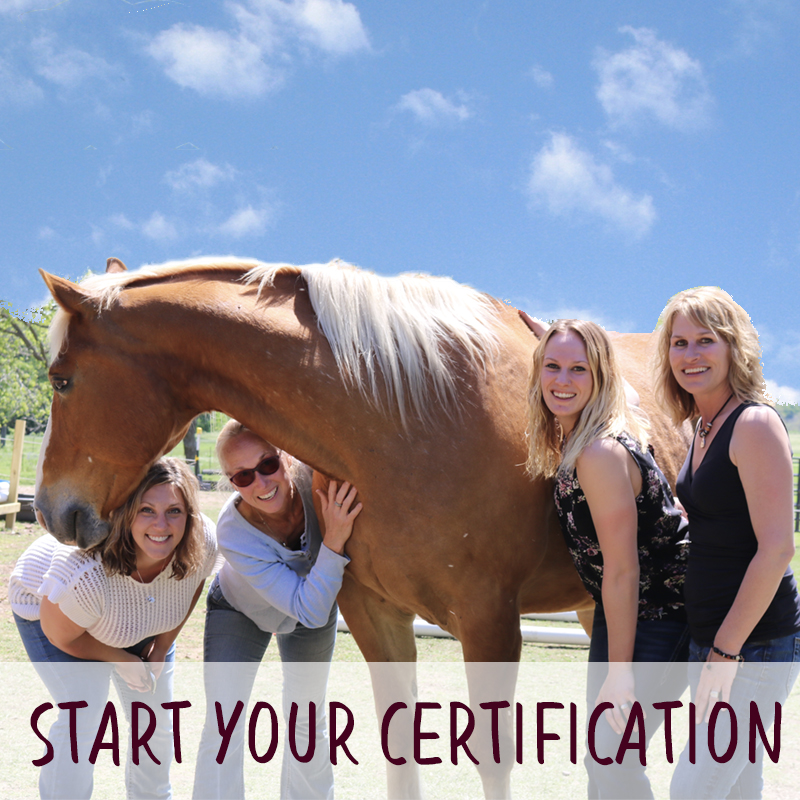Equine Connection Online Theory